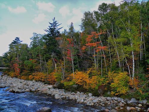 Foliage on the Swift River Along the Kancamagus Highway